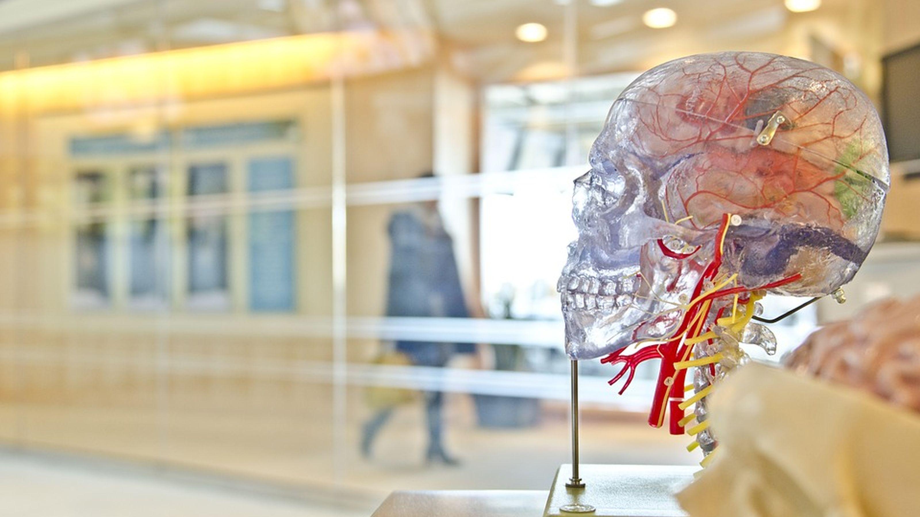 plastic demo brain in an empty room