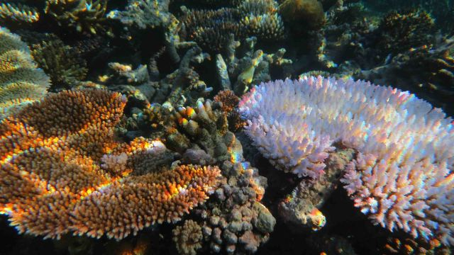 A close up image of a coral reef with a pink coral and an orange coral