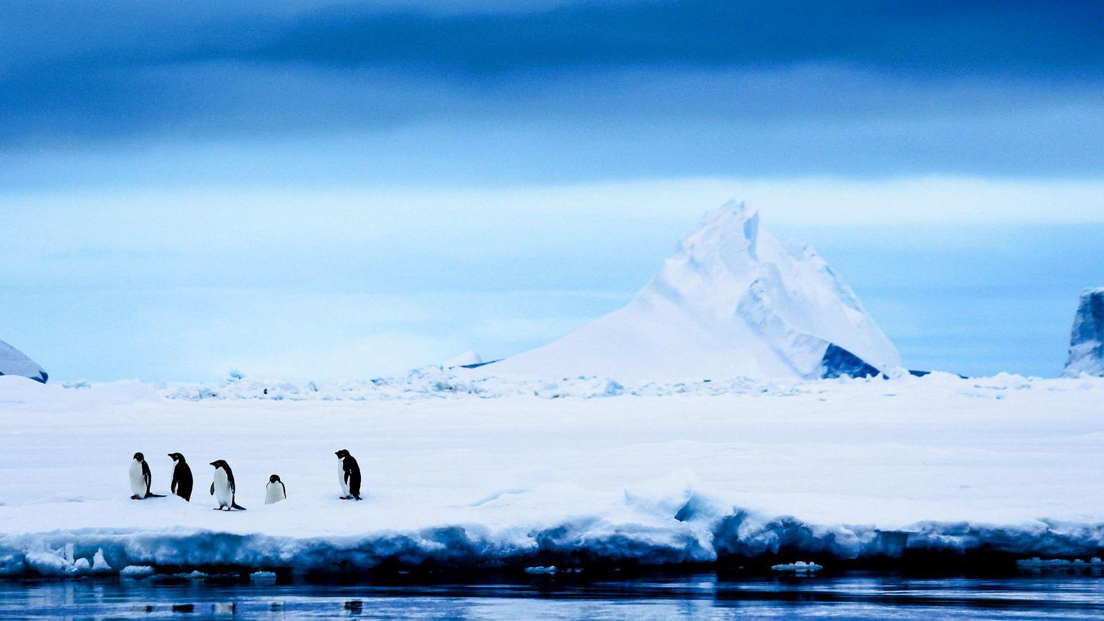 Adelie penguins cluster together in Antarctica.