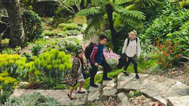 Three students walking along a path through native bush in Wellington.