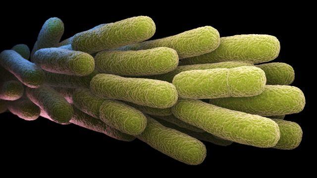 Microscopic photograph of legionella pneumophila bacteria