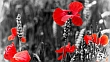 Black and white image with red poppies