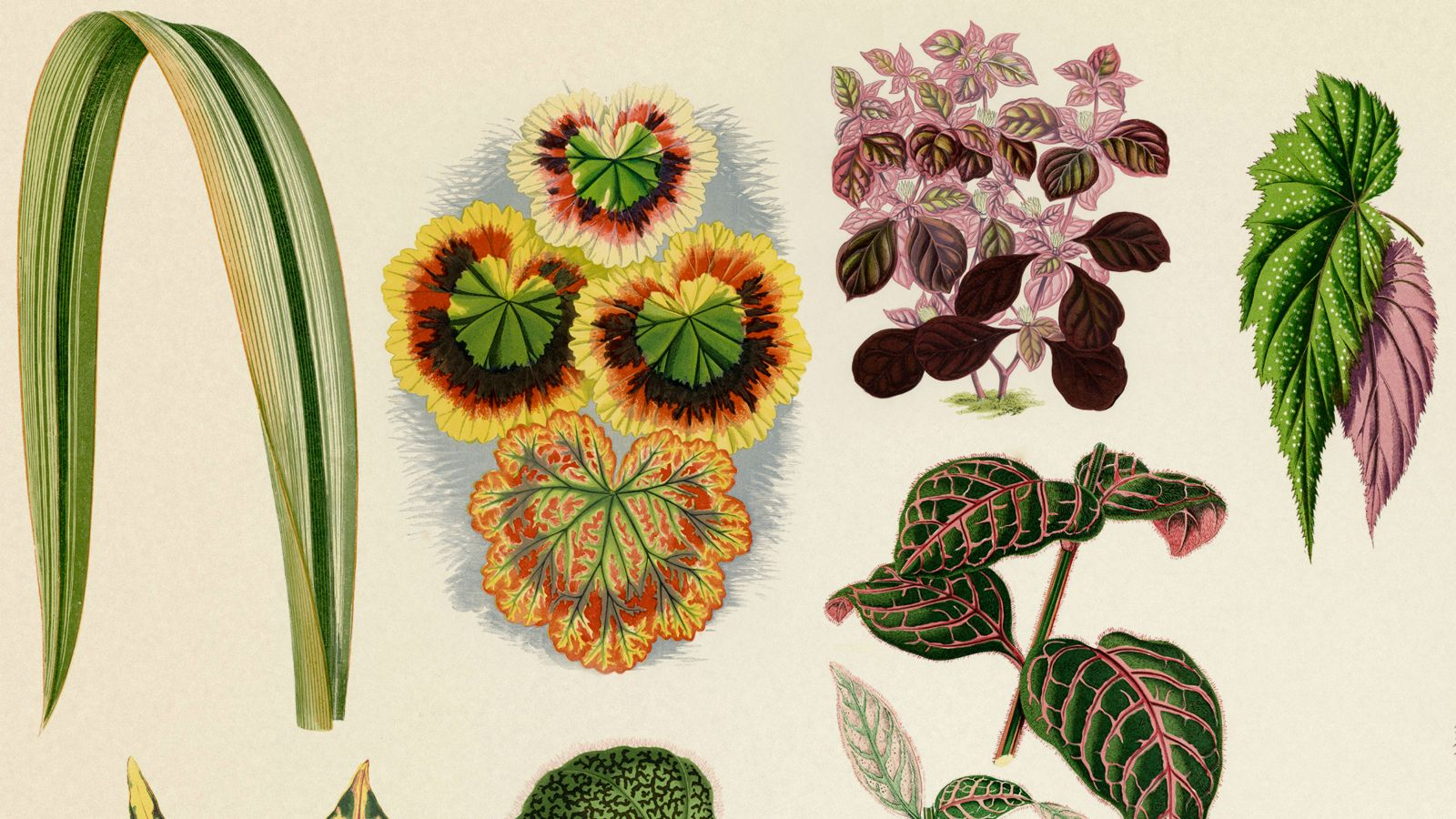 continuing-education-brochure-july-2018-cover-plants