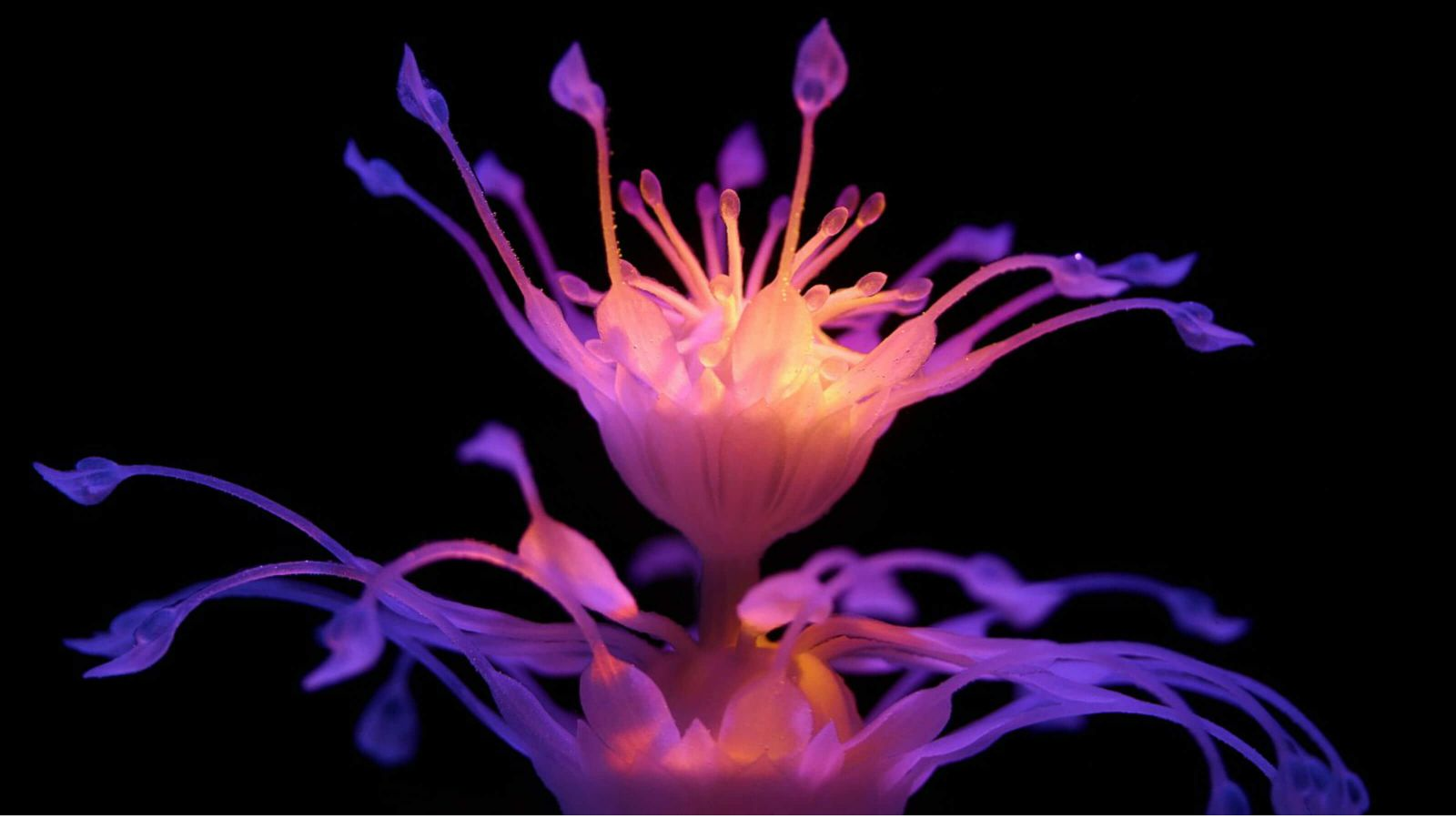 A four-dimensionally rendered and exotic-violet hydrophyte against a pitch black backdrop.