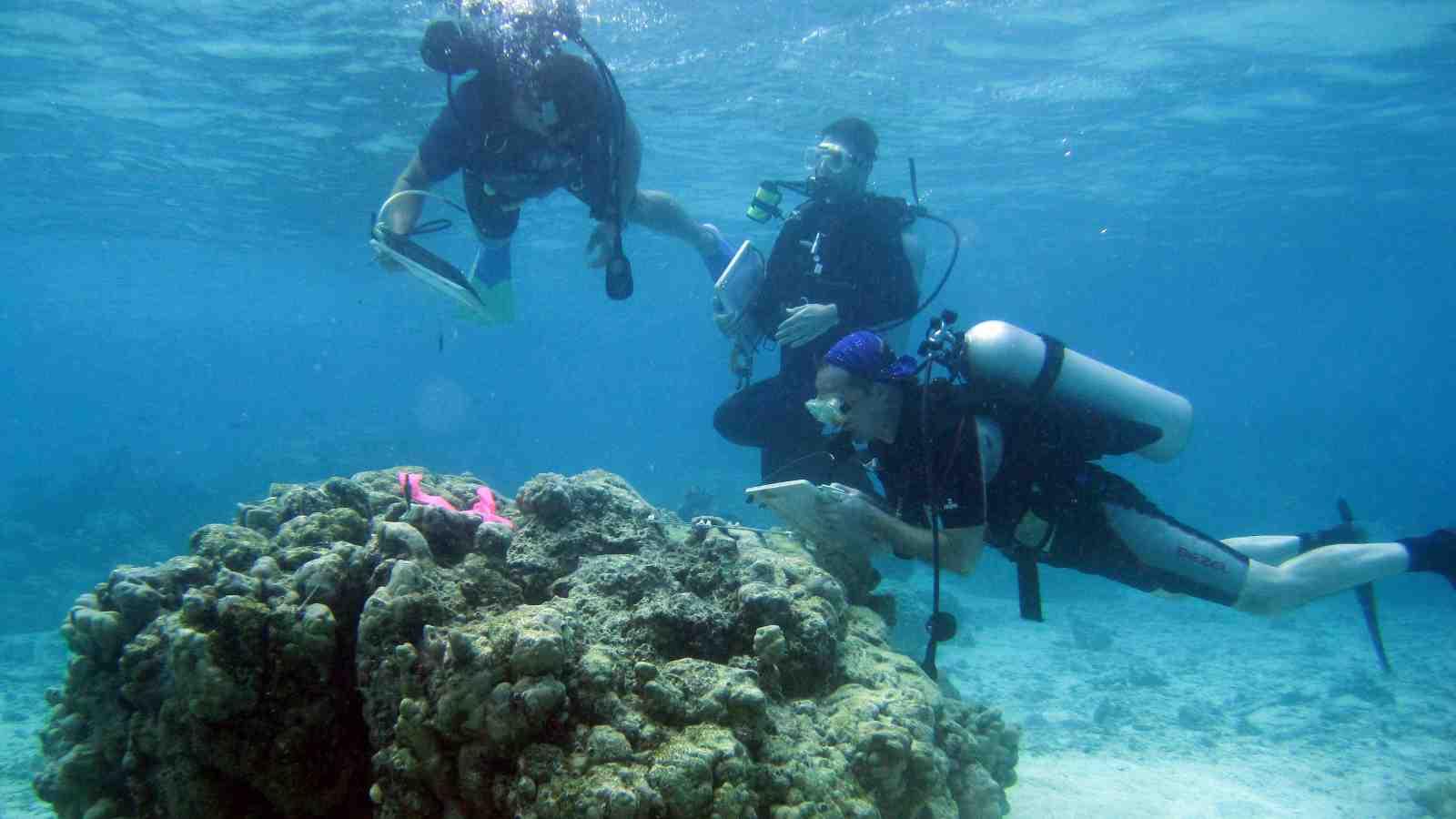 Challenge to focus on New Zealand's marine environment ...